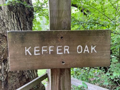 Fényképezés Keefer Oak - Appalachian Trail - Newport, VA