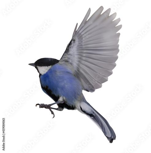 Fotografie, Obraz flight of isolated on white blue tit