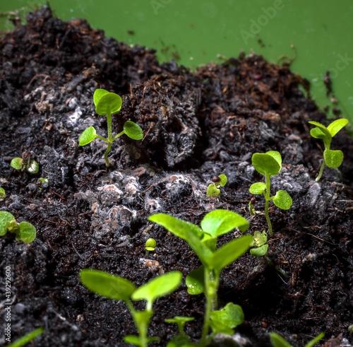 Obraz na płótnie Mold on the ground in a flower pot, mold infested ground