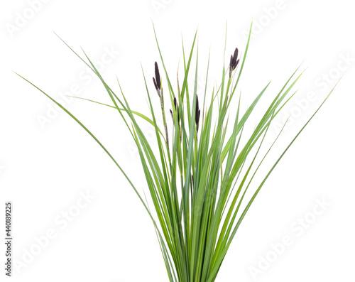 Obraz na płótnie Bunch of green sedge with flower.