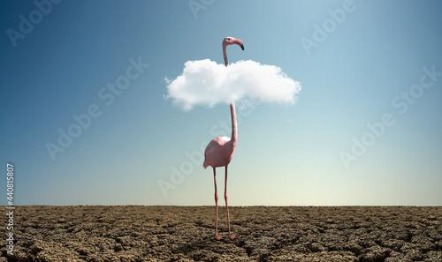 Cuadros en Lienzo pink wild flamingo in severe drought desert
