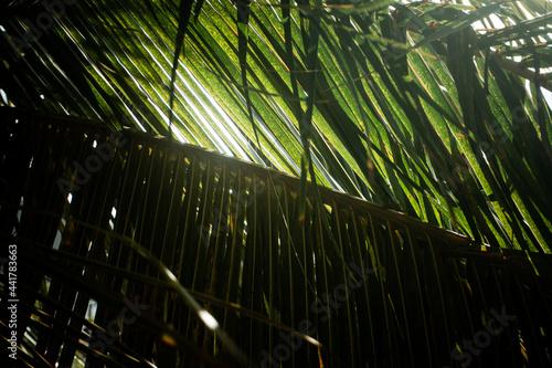 Fototapeta premium Tropikalny krajobraz, palmy kokosowe na tle nieba i słońca.
