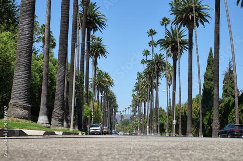 Foto the famous palm tree street in beverly hills, between north santa monica bouleva