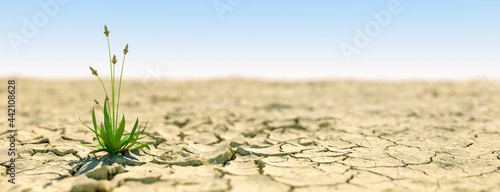 Photo Single plant growing during an extreme drought concept that life carries on 3d r