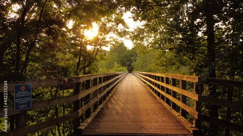 Fotografia, Obraz Narrow wooden footbridge through forest trees at sunset