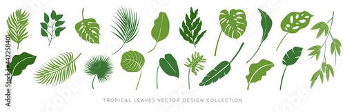 Fotografie, Obraz Tropical leaves vector set