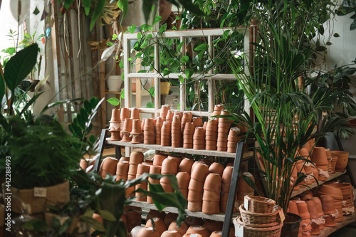 Fotografija Image of ceramics pots on the shelves and green exotic plants in the flower shop