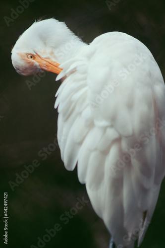 Bird close up Fototapeta
