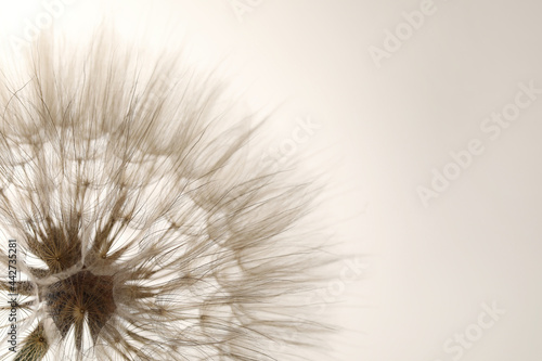 Beautiful fluffy dandelion flower on beige background, closeup. Space for text