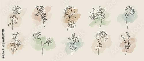 Fotografiet Minimal botanical hand drawing design for logo and wedding invitation