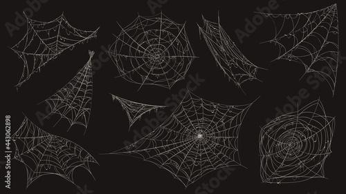 Obraz na plátně Spider web