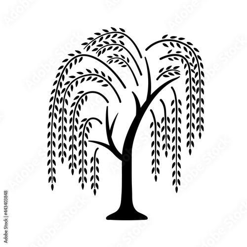 Willow tree Fototapeta