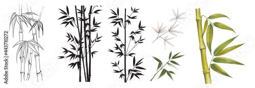 Slika na platnu Set of differents bamboo branches on white background