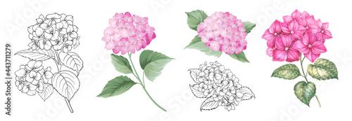 Fotografia, Obraz Set of differents hydrangea on white background