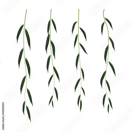 Slika na platnu Hanging branches of willow isolated on white background