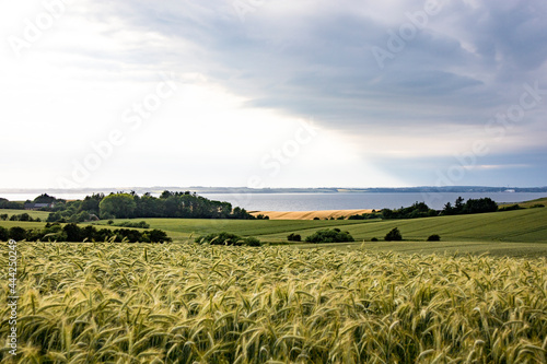 Obraz na plátně Mors, Denmark Agricultural landscape of the Mors island in central Denmark and the Limfjord