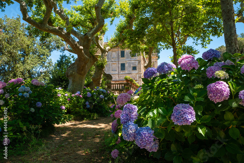 Fototapeta The secret garden of Villa Aldobrandini Frascati, detail of the noble palace in summer with its colorful hydrangeas, its secular plane trees