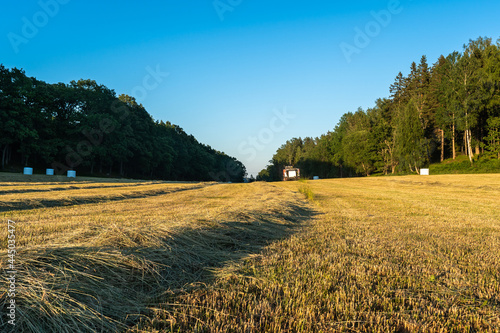Fotografie, Obraz Harvesting hay