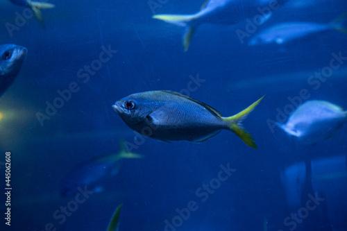 Fish in Saint Petersburg Oceanarium, Russia