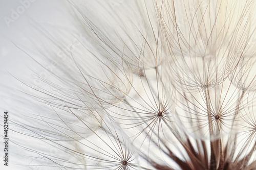Beautiful fluffy dandelion flower on beige background, closeup