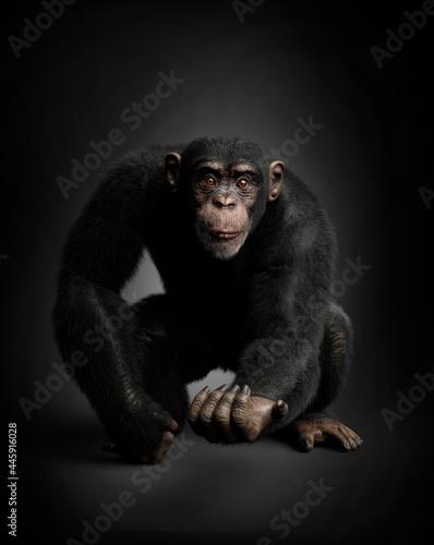 Tela Expressive chimpanzee portrait, black background. 3D illustration