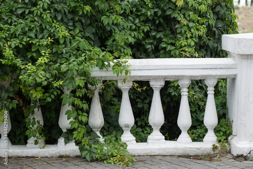 Fotomural Old hedge with balusters in the garden