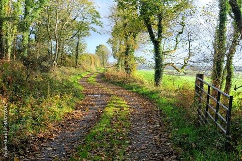 Obraz na plátně country track in autumn