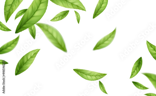 Wall mural Realistic flying falling green tea leaves isolated on white background. Background with flying green spring leaves. Vector illustration