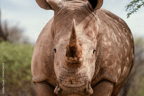 Wallpaper Mural Wild african animals