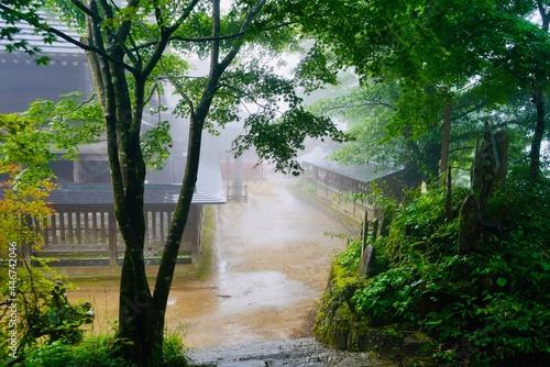 Wallpaper Mural 霧 武蔵御嶽神社 Mist Musashi Mitake Shrine