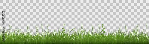 Photo Green grass meadow border