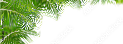 Fotografiet Green leaves palm isolated on white background for montage product display or design key visual layout