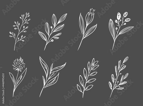 Fényképezés hand draw floral and botanical element