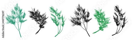 Canvas Dill herb grunge set