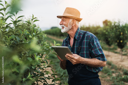 Sixty years old beard agronomist inspecting trees in orchard and using tablet computer Fototapete