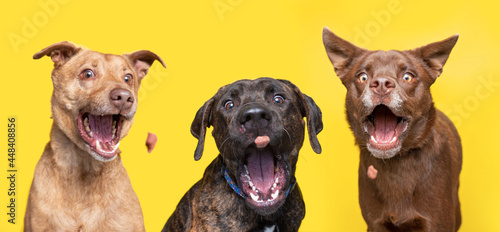 Fotografie, Obraz studio shot of cute dogs catching treats on an isolated background