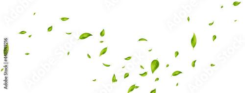 Photo Green flying leaves on long white banner