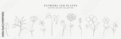 Botanical arts Fototapete