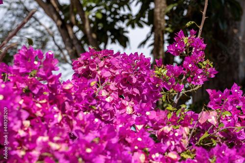 Foto ornamental plant flowers