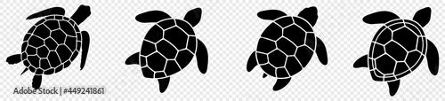 Fotografie, Obraz Turtle marine animal icon