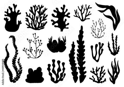 Fototapeta seaweed seaweed set. isolated on white background