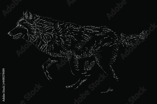 Photo grey wolf scratch vector hand drawing illustration