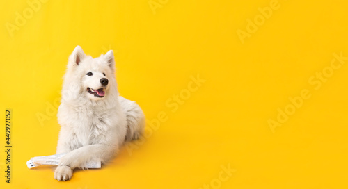 Fotografie, Obraz Cute funny dog with newspaper on color background with space for text