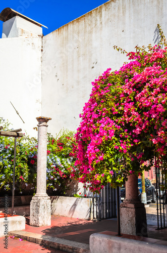 Canvas Print Beautiful bougainvillaea flowers in front of old church in Lisbon, Portugal
