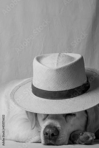 Close-up Of Dog Wearing Hat Fototapeta