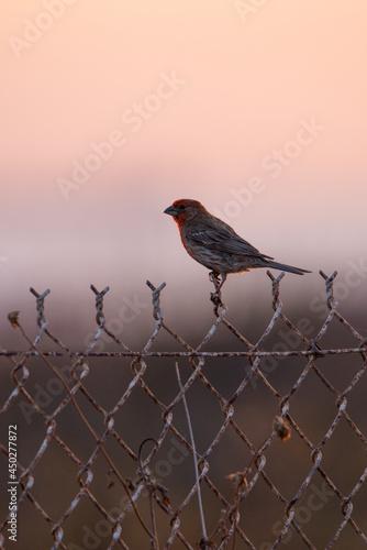 Fototapeta Bird on Fence