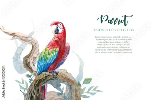 Fototapeta Colorful parrot watercolors with a set of curved branches in a clean design