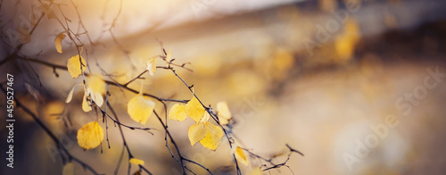 Fotografia The branches of the birch in autumn yellow leaves