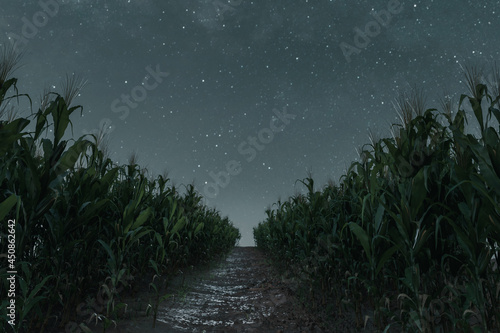 Billede på lærred 3d Rendering of pathway in the middle of green cornfield in front of starry sky at night