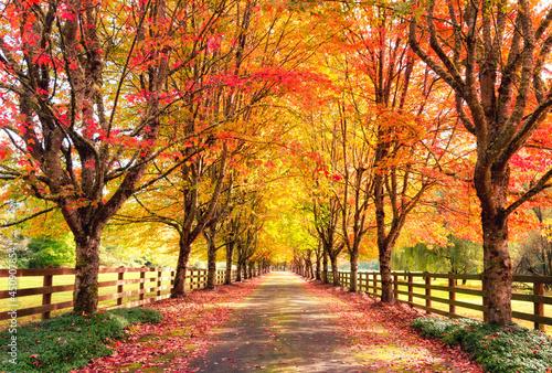 Foto Boulevard of Fallen Leaves (Rockwood Farm)